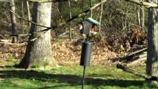 Flying Squirrel Baffles Bird Feeder Baffle