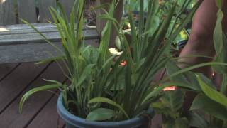 Flower & Plant Garden Care : Tips on Small Container Gardening