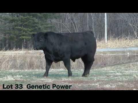 Lot 33 D359 J&K Genetic Power