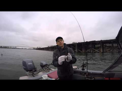 How to catch Spring Chinook Salmon on the Willamette River - Fishing with David Pyle