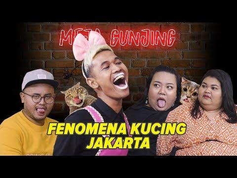 [MEJA GUNJING] - FENOMENA KUCING JAKARTA