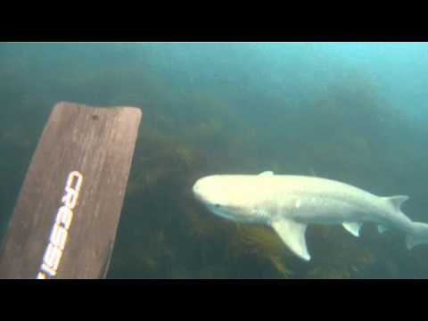 Spearfishing shark attack