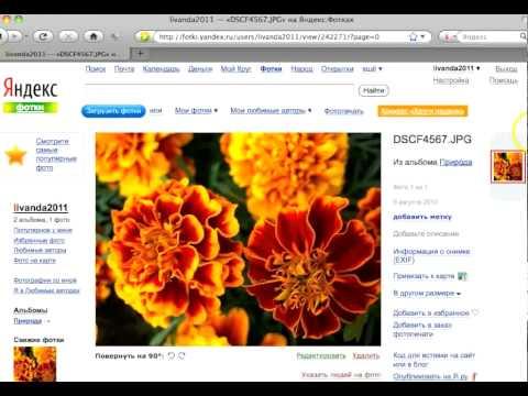 Как вставить фото на Осинку через сервис Яндекс-фотки