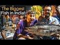 The Biggest Fish In India Chennai Fish Market mp3