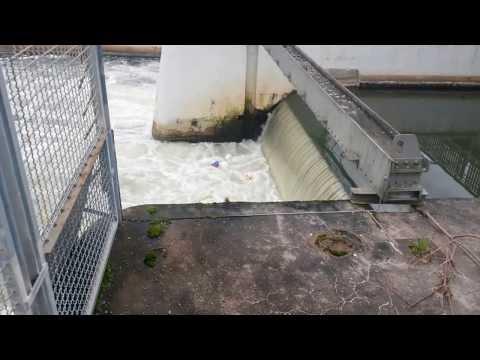 Wehr auf der Nidda - Bälle im Sog der Wasserwalze gefangen