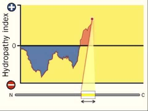 Hydropathy Index | Hydrophobicity Scales