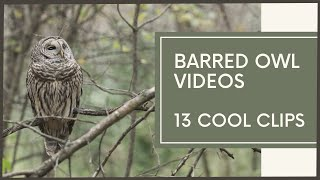 Barred Owl Compilation (Amazing CloseUp Footage!)