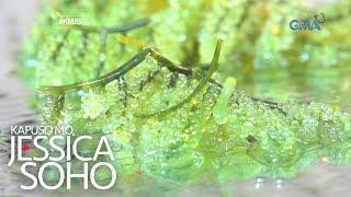 Kapuso Mo, Jessica Soho: Summer seaweed is in!
