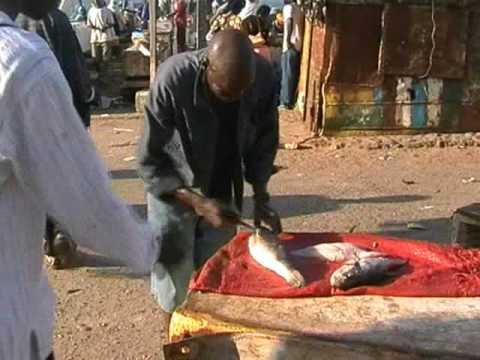 Gambia Holiday at the Bakau Fish Market and Butterfish
