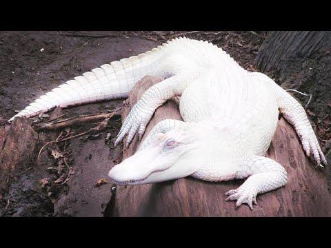 أغرب 10 حيوانات في العالم ستراها لأول مرة فى حياتك .. رقم 1 مخلوق غريب ونادر تم تصويره في عام 2004  - نشر قبل 4 ساعة