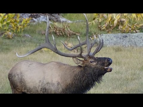 Special Bull Elk Hunt On WMAT: The BIG 5x5!!