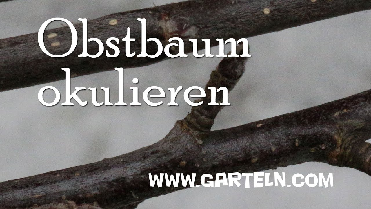 obstbaum okulieren youtube. Black Bedroom Furniture Sets. Home Design Ideas