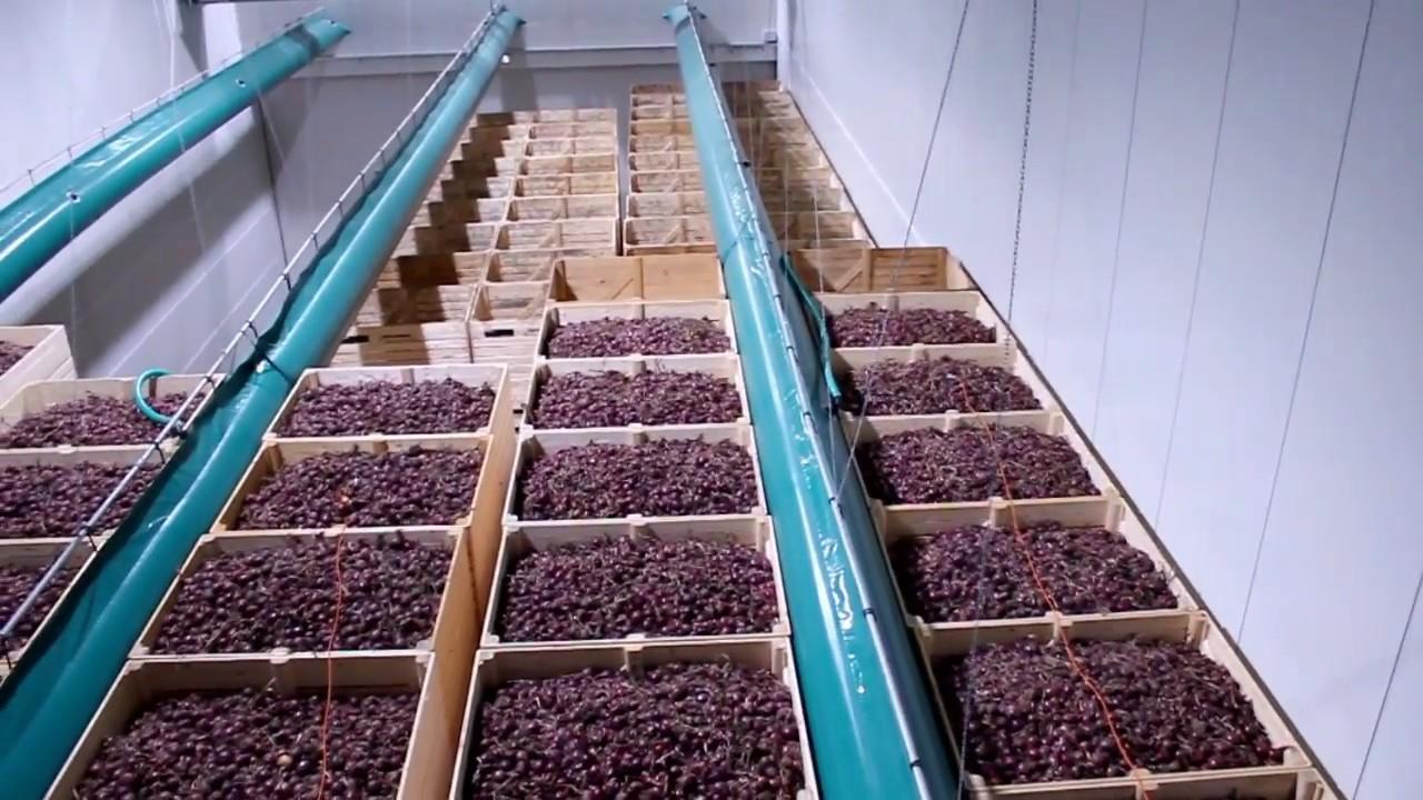 Картинки по запросу хранение картофеля в Голландии