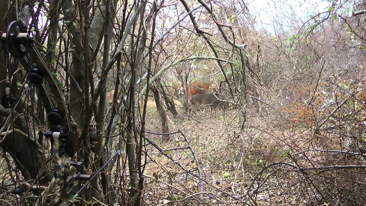 Ninja Big Buck While Compound Bow Hunting Deer On Ground