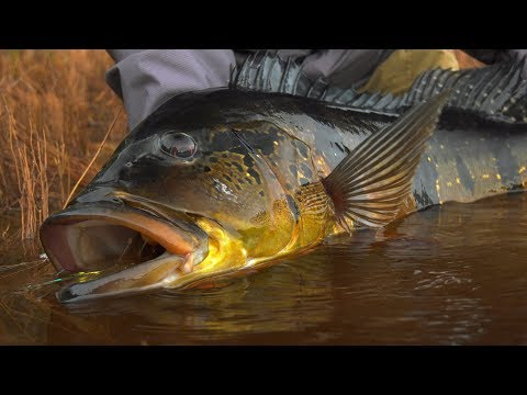 Jungle Fly Fishing *TRAILER* Peacock Bass Fishing by Todd Moen