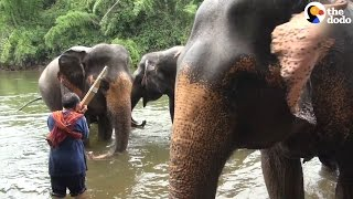 Rescued Elephants Get Their Own Concert