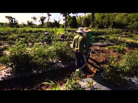 Organic Farming Puts Philippines on Road to Recovery
