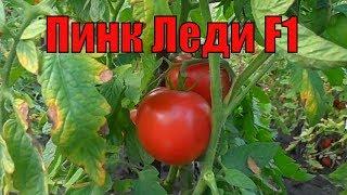 видео ТОМАТ ШЕДИ ЛЕДИ F1