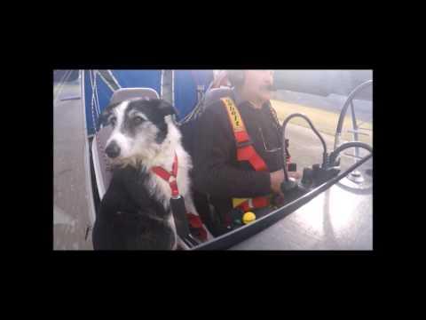 domino chien co-pilote