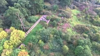 Ruine im Wald (Elbauen GK)