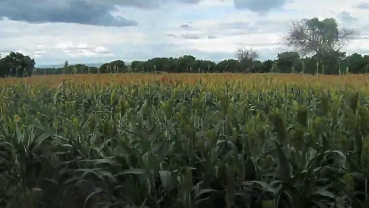 Venta de finca en masaya nicaragua doovi - Fincas para celebraciones en telde ...