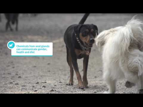 Banfield Pet Hospital Ask a Vet - Why Do Dogs Sniff Each Other?