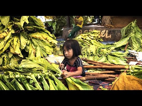 Asia Wired - Indonesia's Child Tobacco Workers