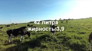 Обзор хозяйства КФХ Александра Босянка
