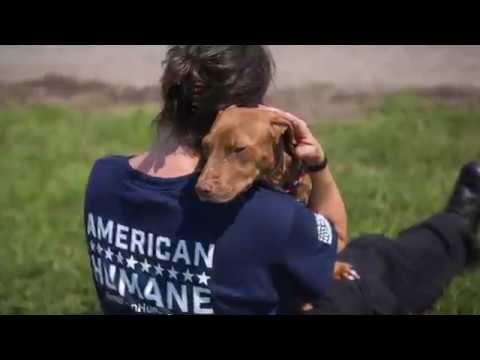 American Humane Rescue Team helping innocent animals of Texas recover