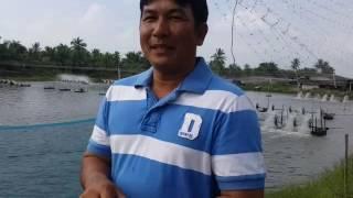 เก๋ บ้านแพ้ว เลี้ยงกุ้งน้ำจืด 35 ตัว/โล /น้องกุ้งไทย