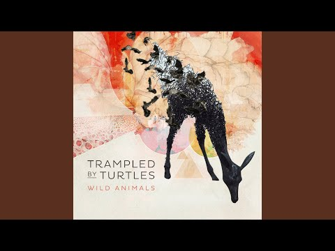 trampled by turtles silver light