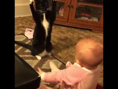 Cat baby friendship  | awesome babies | cat playing with baby