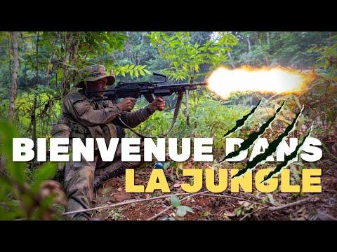 Stage Jaguar en Guyane