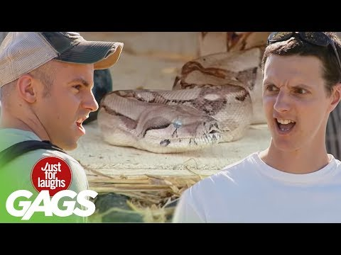 Scary Snake Pranks – Best of Just For Laughs Gags