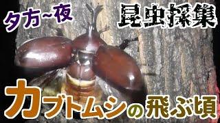 夜を迎えた頃の虫達に会えました.