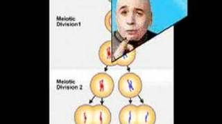 What s The Difference Between Mitosis and Meiosis?