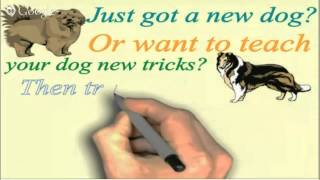 Online Dog or Puppy Training for Your German Shepherd