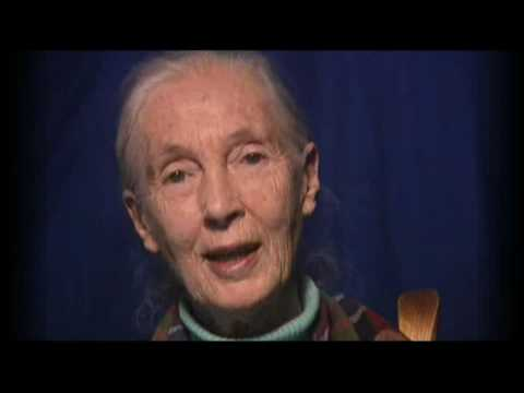 Jane Goodall on T.A. Barron's Books