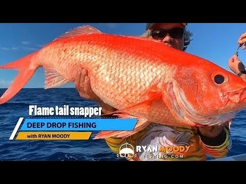 Deep Drop Fishing For Flame Tail Snapper And Other Monsters Of The Deep!