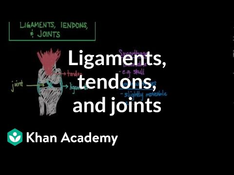 Ligaments, tendons, and joints | Muscular-skeletal system physiology | NCLEX-RN | Khan Academy