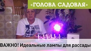 Голова садовая - ВАЖНО! Идеальные лампы для рассады(ЛАМПЫ МОЖНО КУПИТЬ ЗДЕСЬ → https://goo.gl/EqcX7T В этом видео, я расскажу и покажу, какие же лампы, наиболее эффективн..., 2017-02-11T14:00:03.000Z)