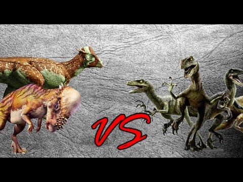 Pachycephalosaurus Herd vs Velociraptor Squad