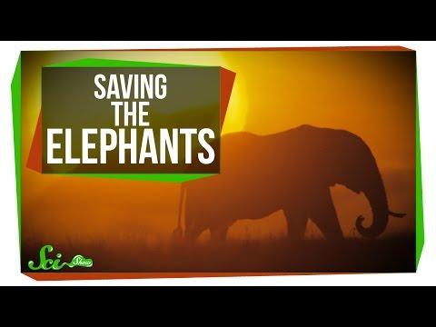 carbon dating elephant ivory