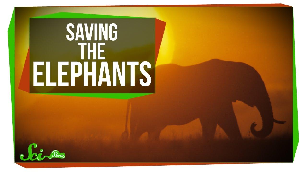 radiocarbon dating elephants