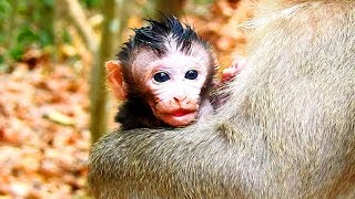 Top Adorable Baby Monkey! Leyla First Mommy of Lora NewBaby in Charles Group