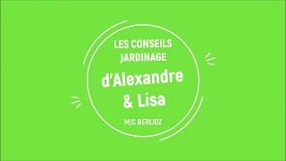 LES CONSEILS D'ALEX ET LISA - #2 - semis courgette concombre
