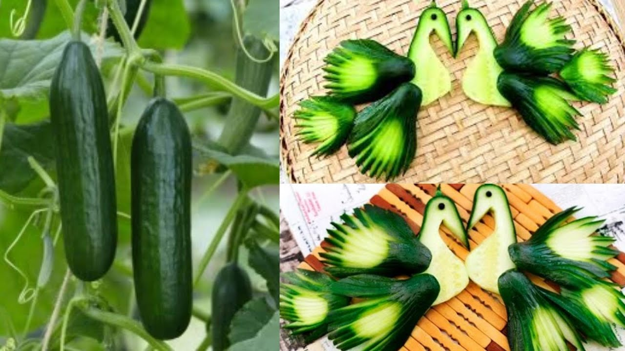 How to make cucumber peacock vegetable carving garnish