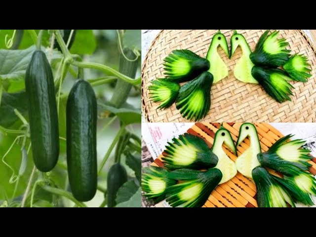 How To Make Cucumber Peacock - Vegetable Carving Garnish - Sushi Garnish - Food Art Decoration