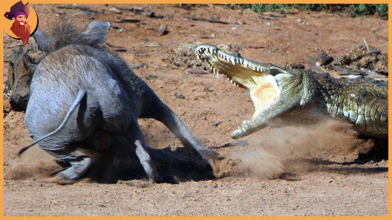 Download 15 Merciless Hunts By Wild Animals