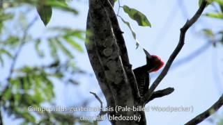 2013 Birding Yucatan Peninsula